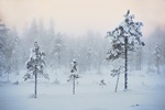Finland winter